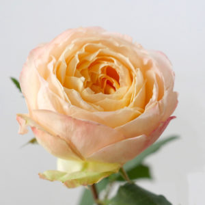 Японские розы